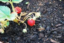 compost-garden