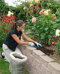 using-compost-in-garden
